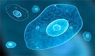Cuadrado contra ameba. Sobre la investigación en artes - Óscar Cornago