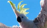Rayos y truenos #24 - Emisiones Cacat�a